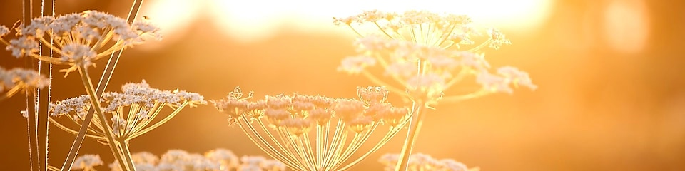 Flowers in a field with sun shining